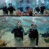 朝一番の海で体験Dive!