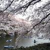 【2019年お花見情報】東京中心部のお花見スポット・桜の名所まとめ(毎日更新の開花情報リンクあり)