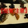 【閲覧注意】高田馬場の『米とサーカス』で虫料理を食べてきました。