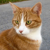 【猫版】ハナちゃんの動物病院 まとめ読み①(Complete)を公開しました。