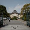 京都府庁旧本館の枝垂れ桜