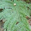 森のわたり橋下の探索 その4 湿り気を好む植物達