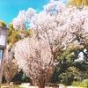 名古屋で遊び倒してきた。2:徳川美術館