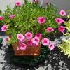 小皿の花たち