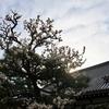 奈良町 春にほほえむ/柔らかい風 優しい日差し 梅のふくいくたる香りが漂いはじめました。