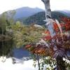 紅葉と森の空気に癒される♪