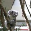 コアラが可愛い!埼玉県こども動物自然公園に行ってきた!