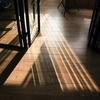 リビングの床材を検討する③木材の種類など