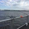 昼間に釣れて来た25センチのアジ^ ^(第12回ふれーゆ裏釣行20200801)