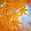 透明感と色気の共存、秋メイク