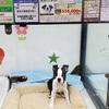 10年目の我が家の愛犬3頭・サービス精神旺盛:ロッキー2