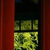 紅葉④(鎌倉・鶴岡八幡宮)