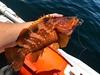 今年もはじまった灼熱の2馬力ボート釣行!