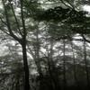 霧けぶる八経ヶ岳