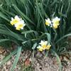 もうすぐ春だにゃん