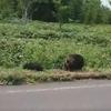 熊は非常に危険な生き物!不用意に近づくな。