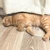 猫の寝顔を観察する