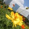 過去の写真セレクション(秋の花と福岡・熊本旅行)