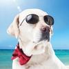 犬も熱中症に? 季節ごとの注意したい病気や体温などの生理データの測り方について