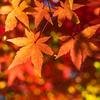 11月中旬〜 *+ 秋の宝石 人気の紅葉スポット(関東) +*