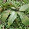 葉と枝が落ちていたらとある虫の仕業かも?