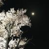 日本一素晴らしいと言われた夜桜🌸