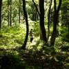 森を整備する。森で楽しく遊ぶ。