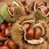 栗の栄養価・効果・食べ方等まとめ