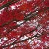 まだ豊かな紅葉が
