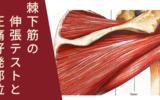 棘下筋の伸張テストと圧痛好発部位
