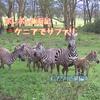 【ポレポレ旅行記】ケニアでサファリ②《ナクル湖編》