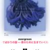 2019/07/24〜evergreen〜