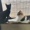 窓際でたそがれる子猫すみと三女あんず(^^)
