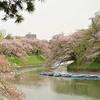 🌸千鳥ヶ淵と周辺の桜を撮影しました🌻