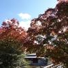 白鳥庭園 2020.11.10