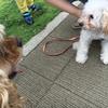 お散歩中の「犬同士の付き合い方」とマナー<1>~ノーリードと排泄スルー