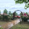 雨のバラ園へ