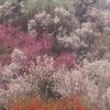 おとぎの宿から花見山へ❀(福島県)