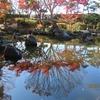大磯城山公園の紅葉と展望台からの富士山 2019.11.29