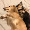 犬は匂いの世界に住んでるね。