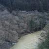 朽木渓流魚センター釣行 大雨後の大爆釣 その1