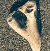 謎の骨と自然の威力