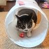 猫たちへのクリスマスプレゼント2020【IKEAプレイトンネル】