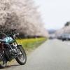 桜とバイクを撮りたくて2
