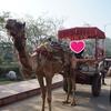 世界一周インド(アーグラー)編 憧れのタージマハールと爆睡のアーグラー城