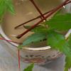 とっても長生きなモミジの葉っぱ