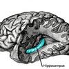 固執する記憶に対する記憶の固着性