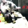 投稿しました 人喰いの大鷲トリコ3