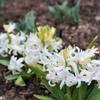 冬~春の庭 落葉植物と常緑植物のバランス