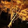 【いま行きたい絶景】愛知県の紅葉スポット~香嵐渓~